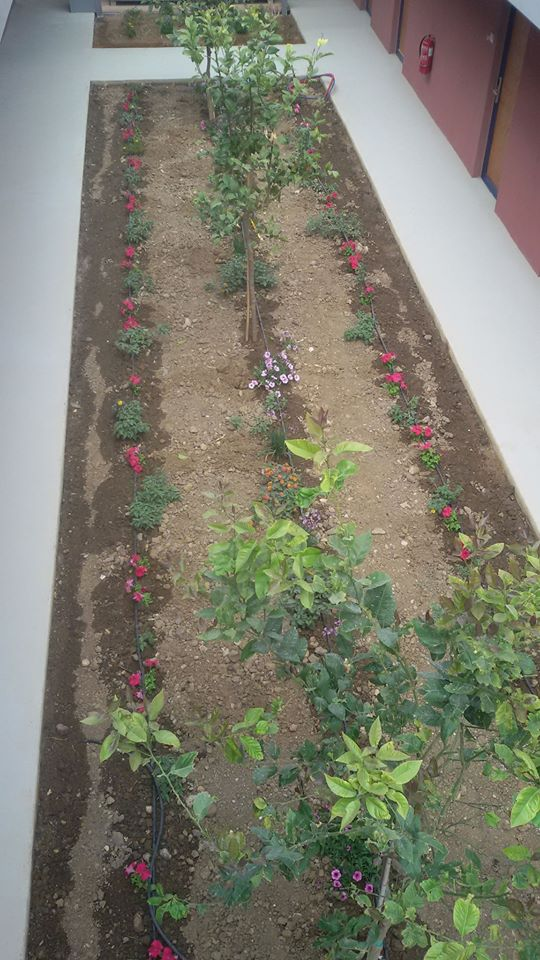 antonis-garden-corissia-harmony-hotel-before-002