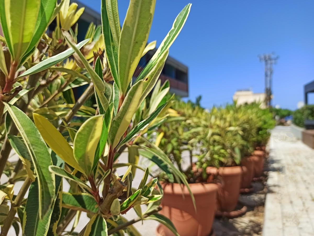antonis-garden-ophelia-signature restaurant-003