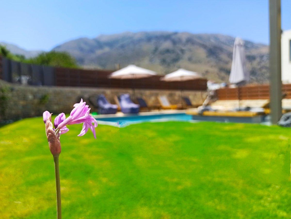 antonis-garden-minoas-luxury-villas-after-00032