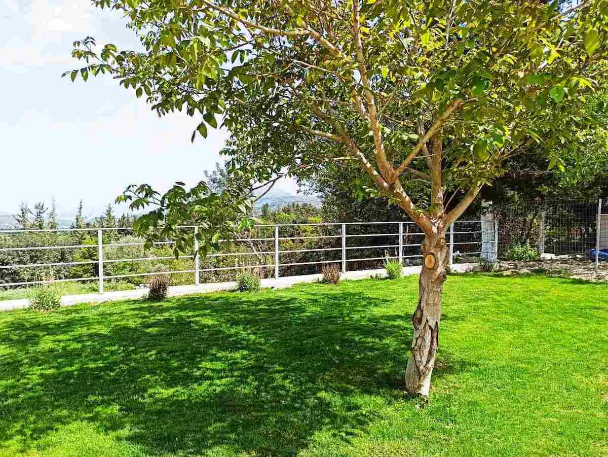 antonis-garden-minoas-luxury-villas-after-00005