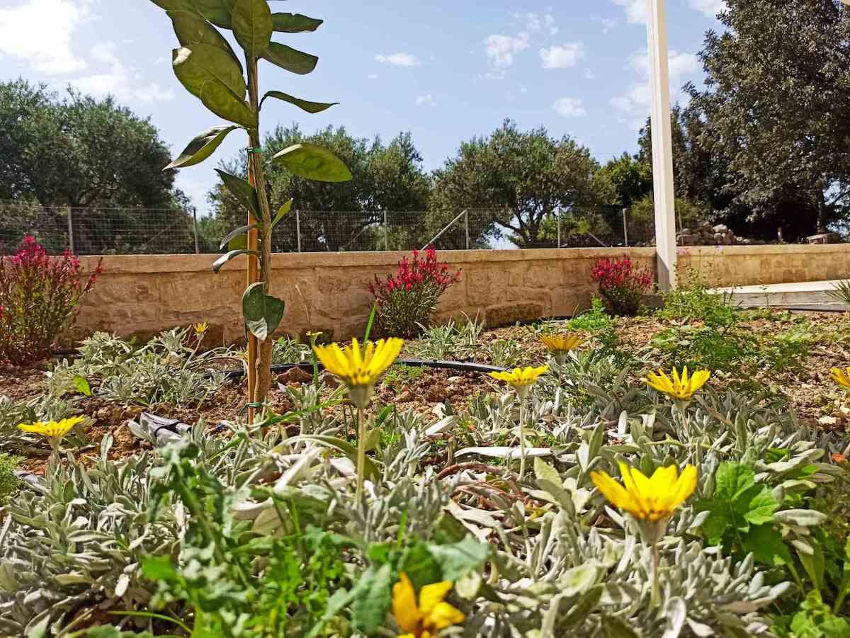 antonis-garden-minoas-luxury-villas-after-00006