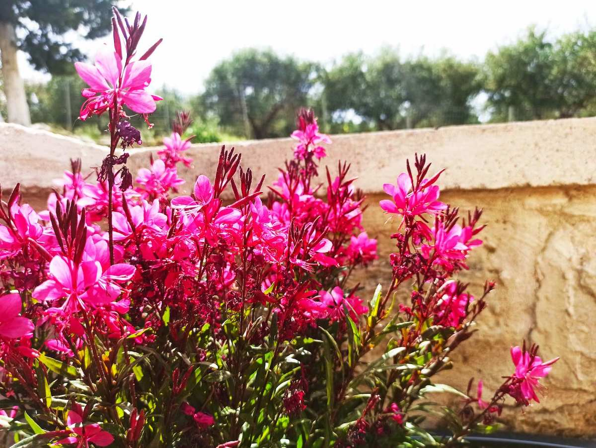 antonis-garden-minoas-luxury-villas-after-00009